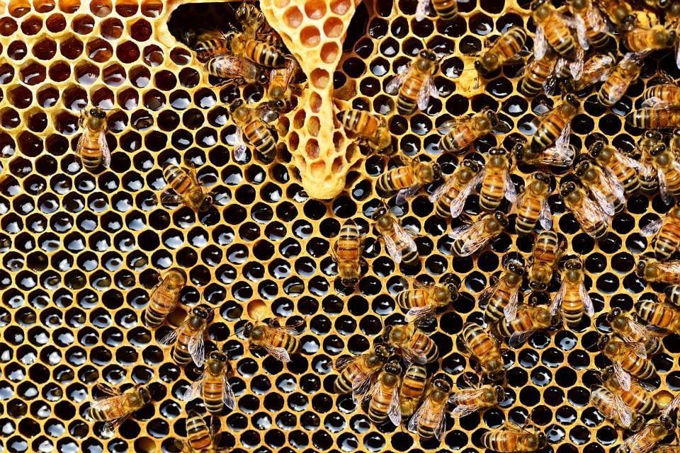 Podpora vzdelávania mladých farmárov v oblasti chovu včiel a produkcie medu z liečivých rastlín